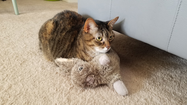 image of Sophie the Torbie Cat lying on the floor curled up with a plushy bunny