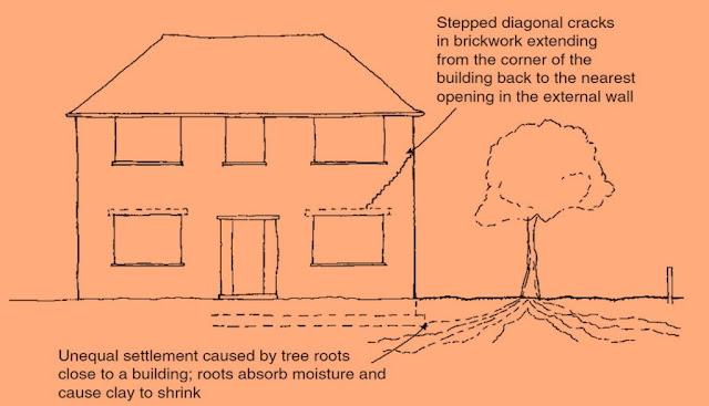 Pengaruh Akar Pohon ke Bangunan dan Cara Menghindarinya