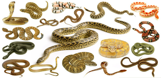 Snakes Names, Meaning and Pictures | Necessary Vocabulary