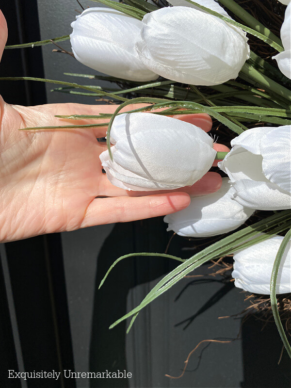 Large White Craft Tulips in hand for size comparision