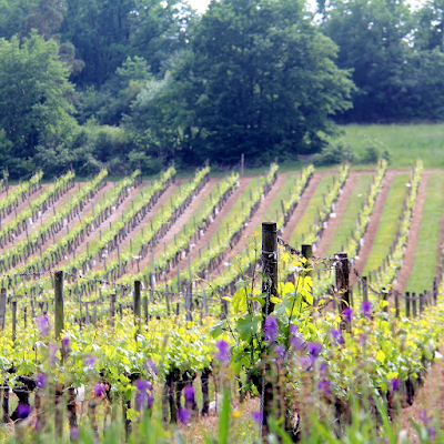 Hiking through the vineyards.