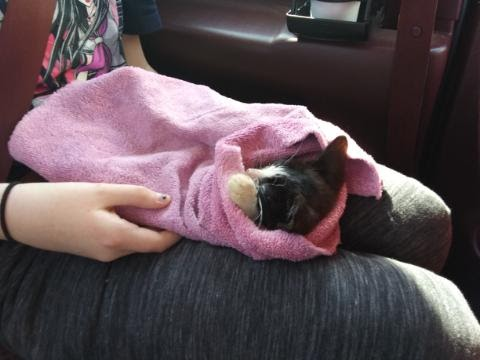 Kitten update #2