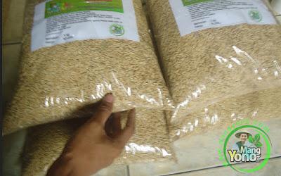 Dodong Pagaralam, Sumsel  Pembeli Benih Padi TRISAKTI 75 HST Panen.  5 Kg atau 1 Bungkus.