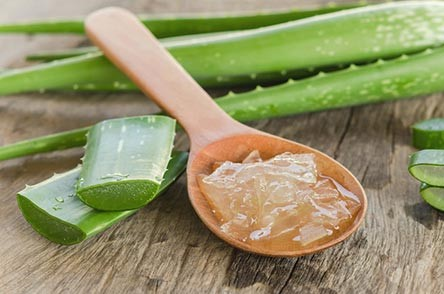 Does aloe vera juice help you lose weight?