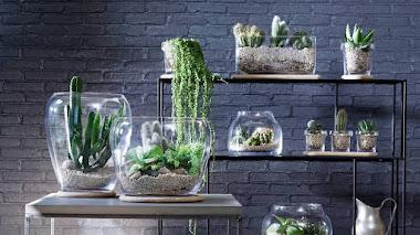 Macetas y terrarios abiertos de vidrio soplado a boca