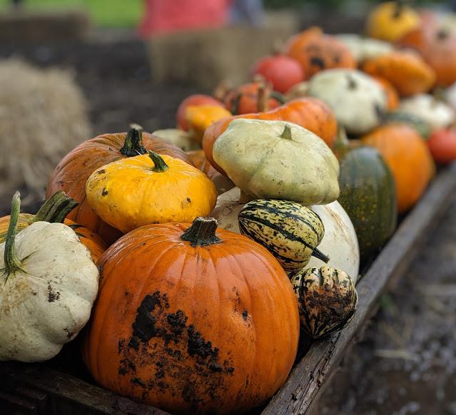 Top Tips for Pumpkin Picking at Spilmans Farm