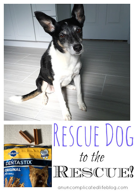 Do you have a shelter dog in your life? PEDIGREE® will donate a bowl of food to a dog in need during the month of October! #PedigreeGives #CollectiveBias #ad
