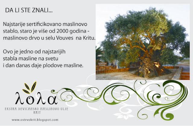 Najstarije stablo masline se nalazi na Kritu