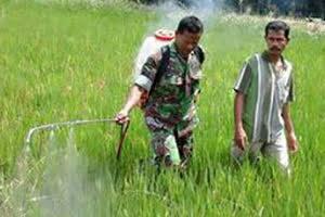 Sertu Ibrahim Lakukan Penyemprotan Didampingi Oleh Petani di desa Timbang Jaya