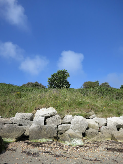 Tree on a cliff, with rocks in front to defend against erosion by the sea.