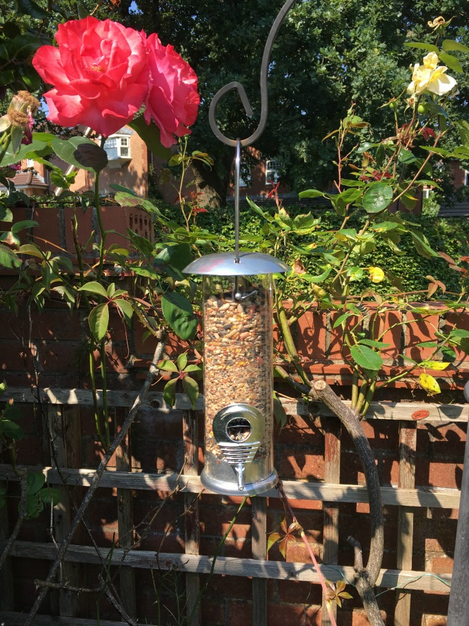 BoxWild-Children's-Big-Bird-Gift-Box-Review-bird-feeder-hanging-in-the-garden-next-to-a-rose-bush