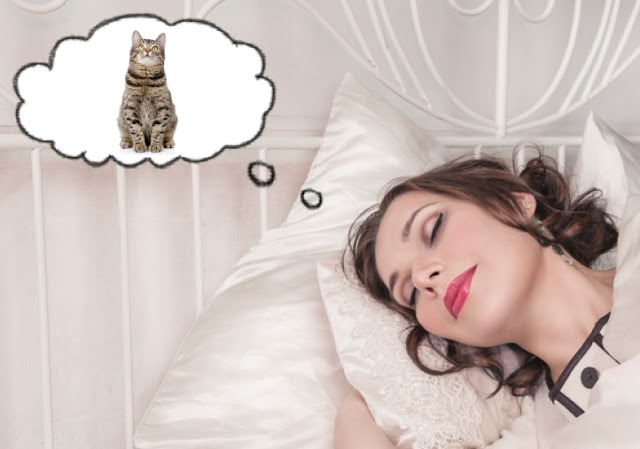 Woman dreaming of a cat
