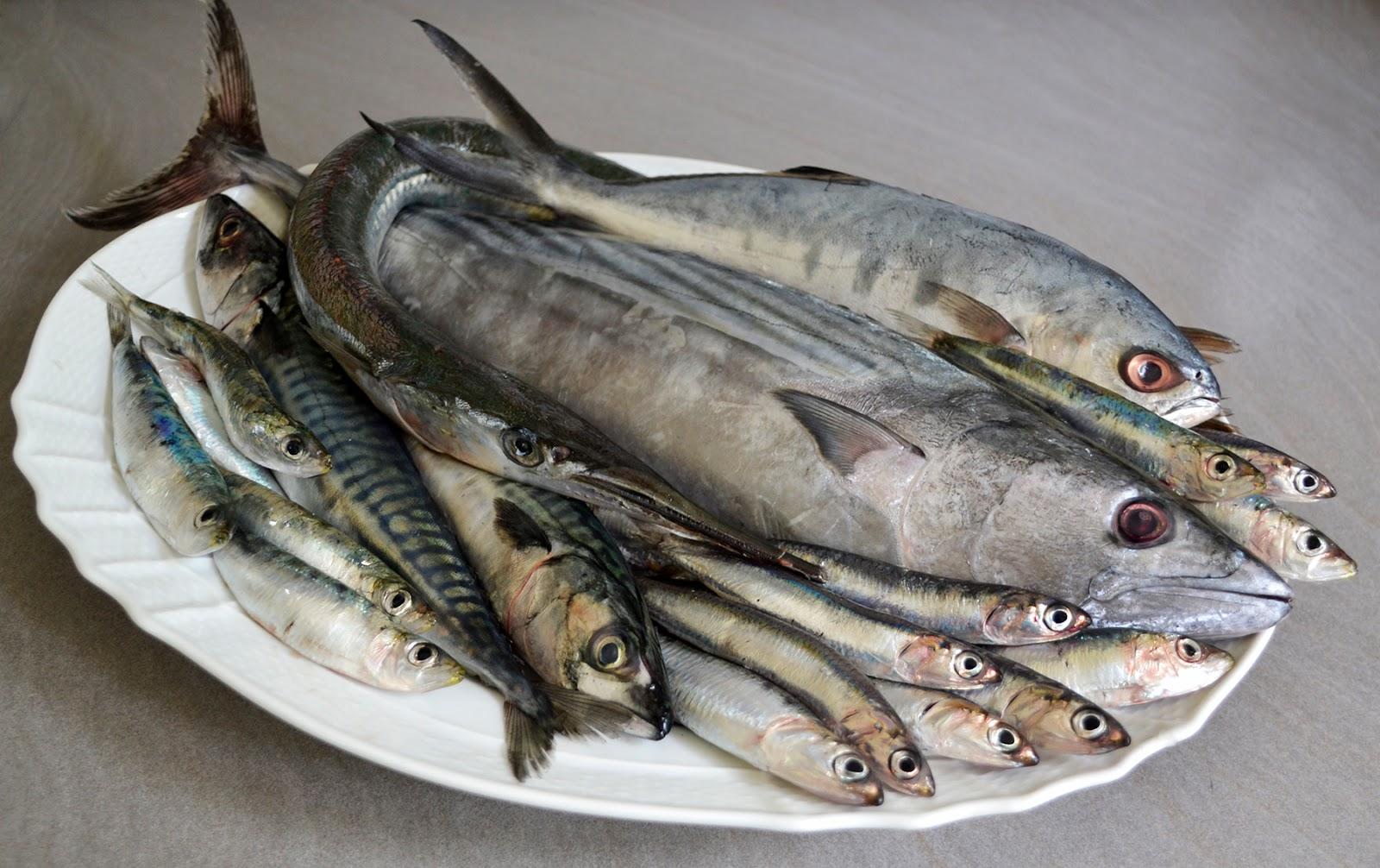 Poverimabelliebuoni Perche Il Pesce Azzurro E Azzurro