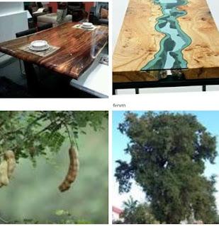 Kekurangan dan kelebihan kayu asam untuk furniture