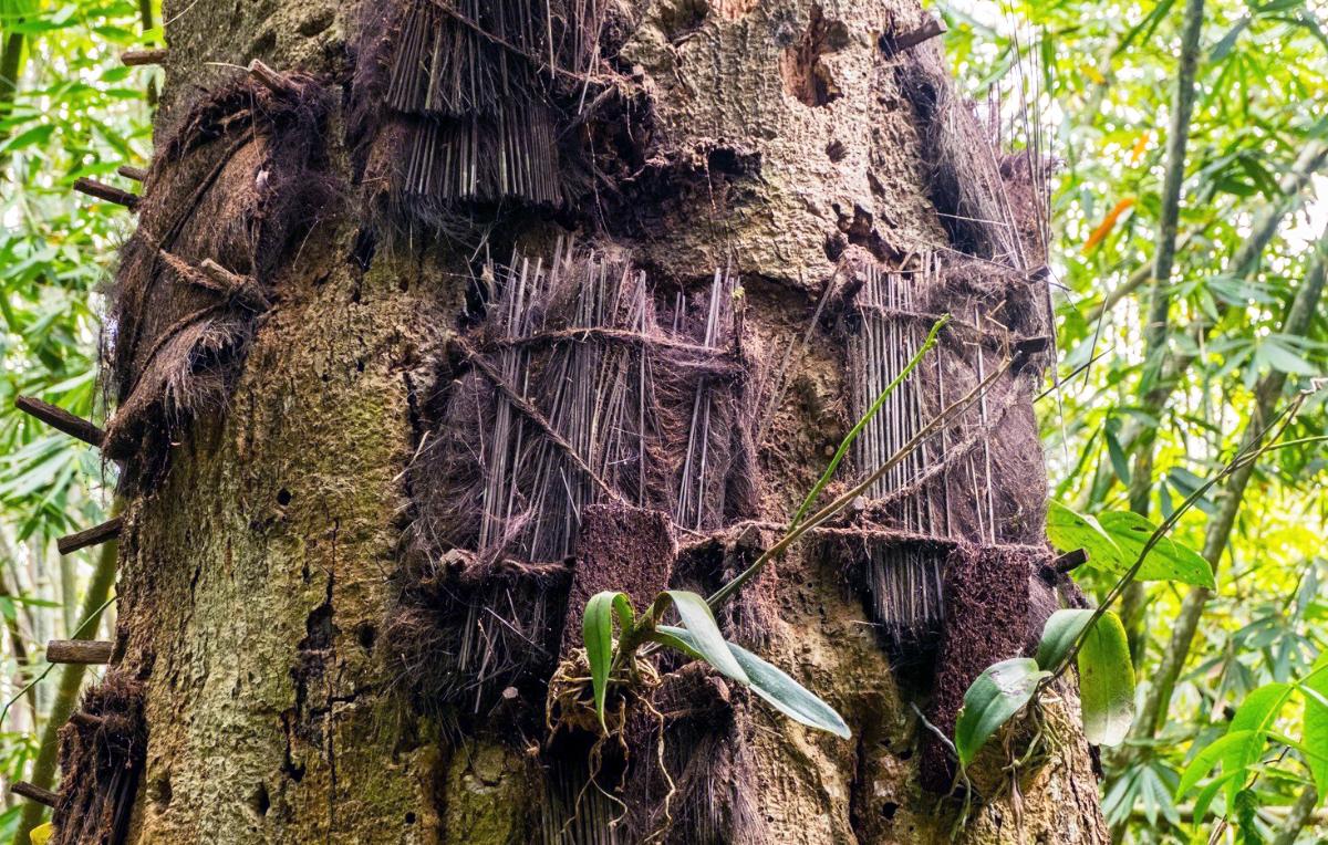 Passilirang Anak Kecil di Pohon Kayu Tarra Besar Kuburan Naka kecil toraja