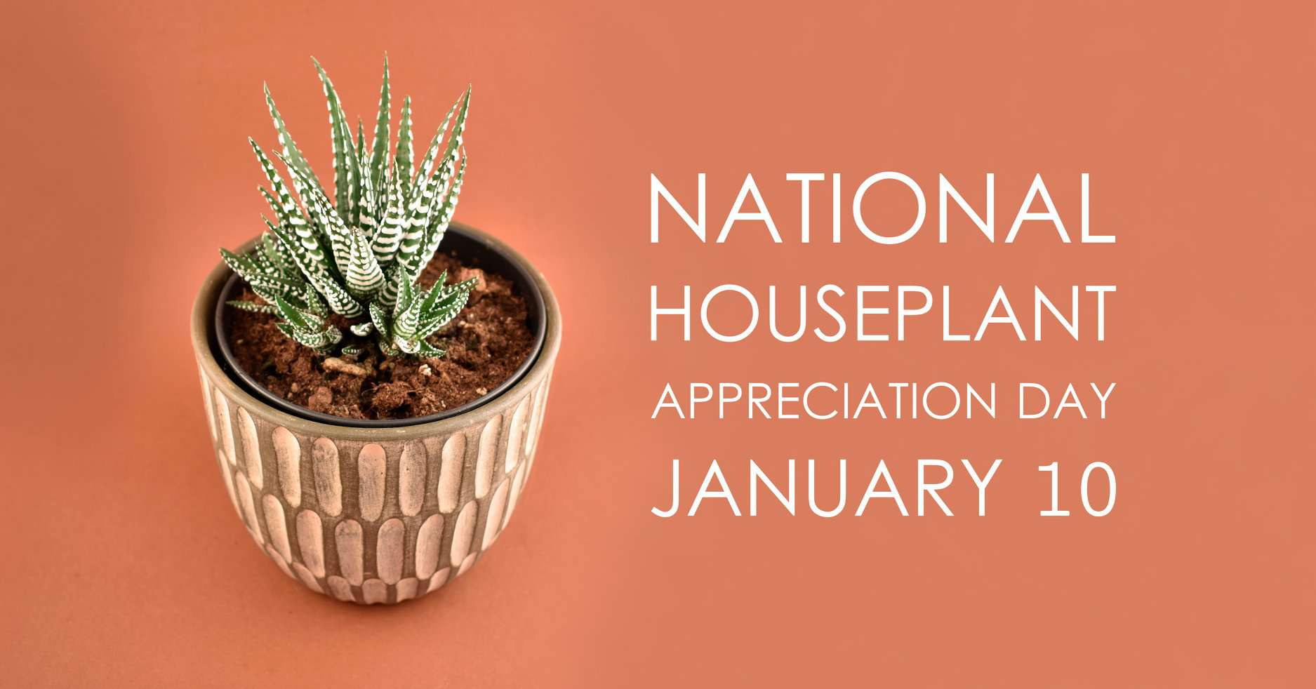 National Houseplant Appreciation Day Wishes Awesome Picture