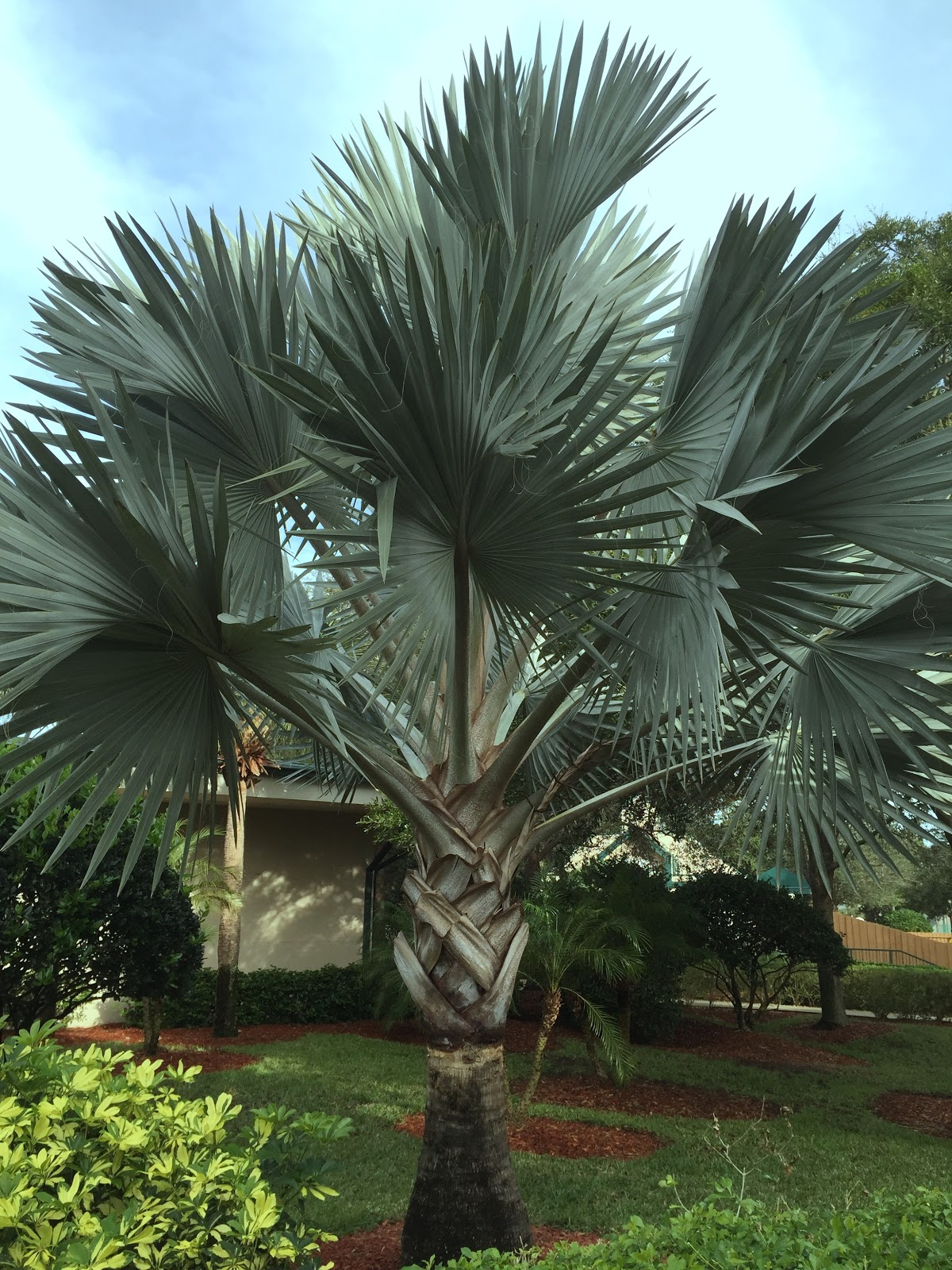 Notable Plants from My Trip to Orlando [Backyard Neophyte