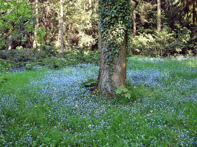 kwiaty, niebieskie, drzewa, park