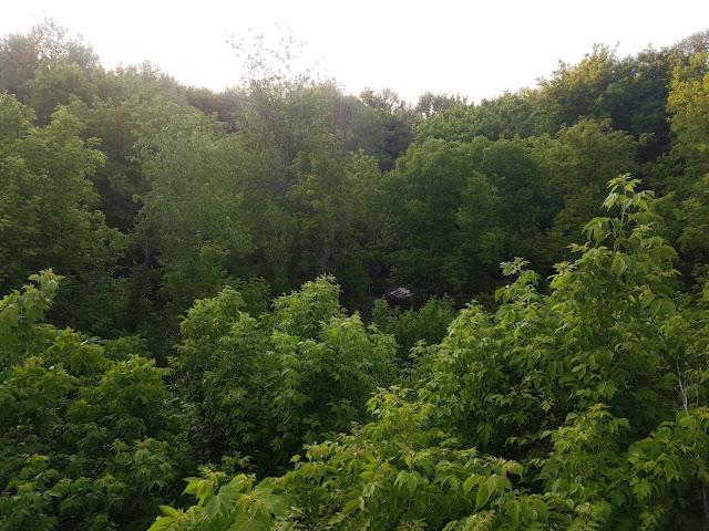 заросли деревьев и кустов,  мои 92 дня лета