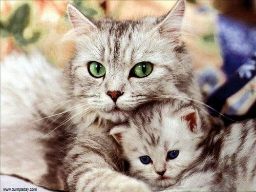 Photo Chat mimi avec Maman