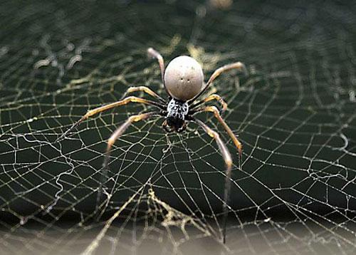 Kết quả hình ảnh cho Điềm báo cát hung từ giấc mơ thấy con nhện