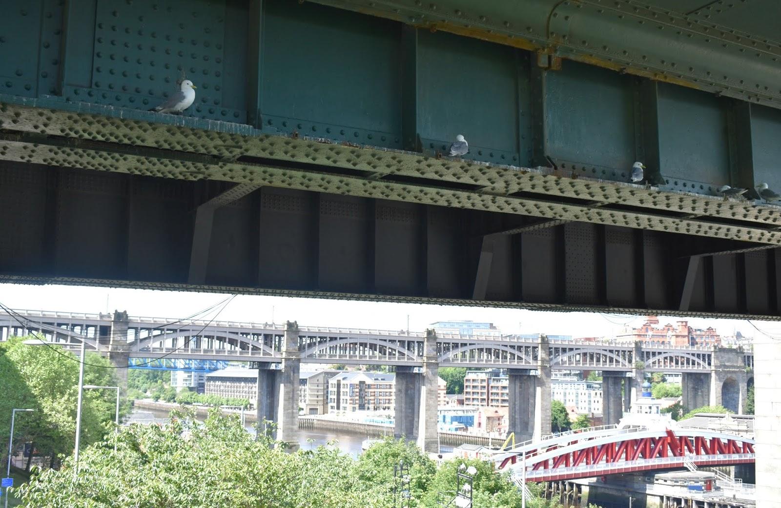 Tyne Bridge Newcastle - Kittiwakes