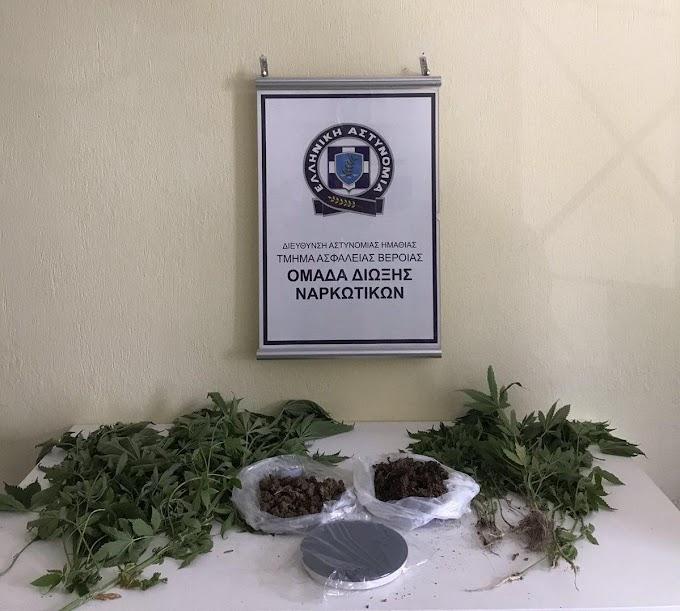 Ημαθία-Καλλιεργούσε στην αυλή 34 δενδρύλλια κάνναβης, ύψους έως 1  μέτρου και 20 εκατοστών