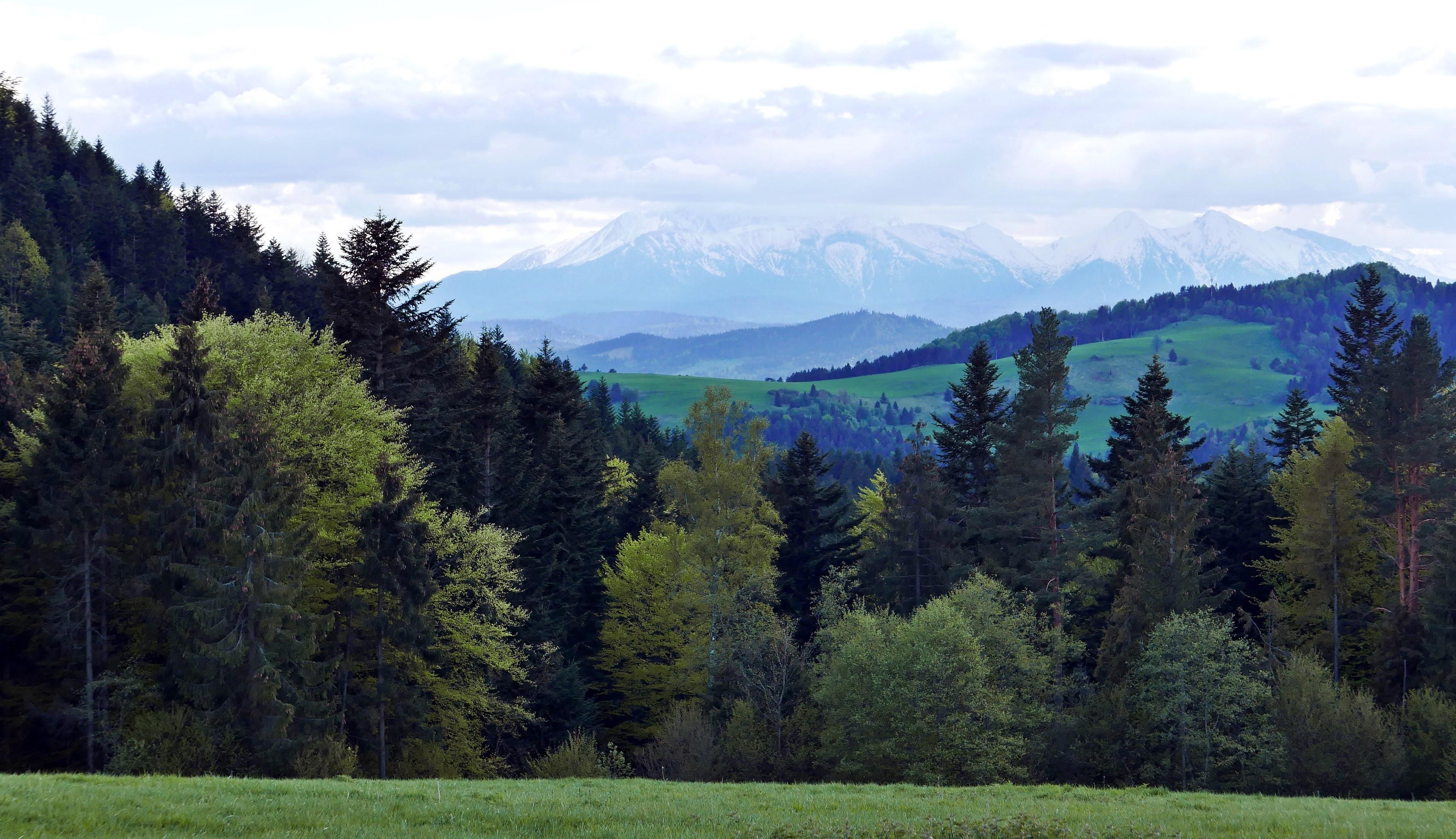 Pieniny Wysoki Wierch. Wysoki Wierch szlak ze Szlachtowej. Najpiękniejsze widoki w Pieninach. Panoramy Pieniny. Szlaki turystyczne w Pieninach.