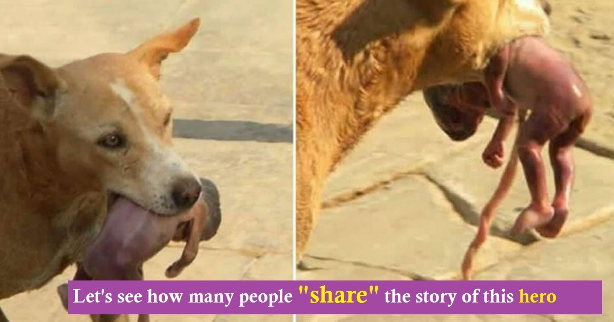 Famished Stray Dog Searching For Food In Garbage, Finds An Abandoned Newborn Baby