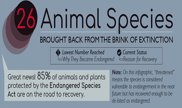 26 Animals Brought Back from the Brink of Extinction #infographic