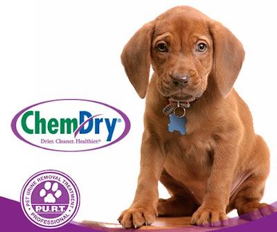 Pet urine odor removal Burleson Cleburne Grandview Joshua