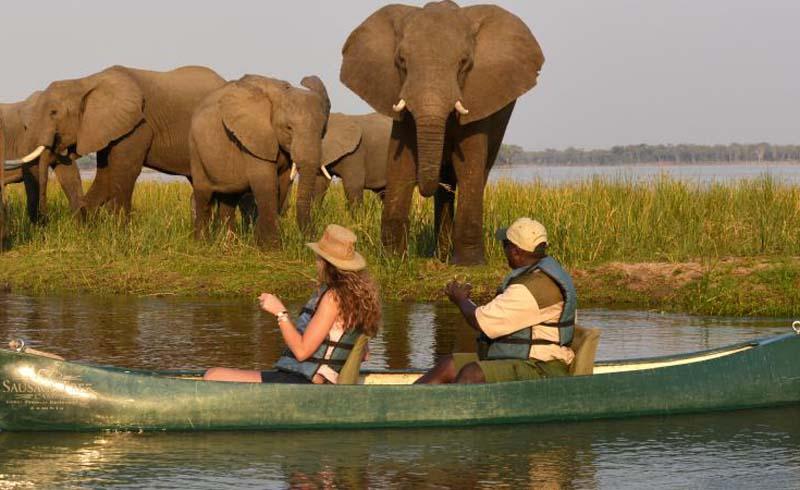 Safari, adventure