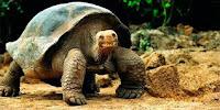 https://iliocapozzi.blogspot.com/2017/11/suuu-manifica-eto-sie-grande.html