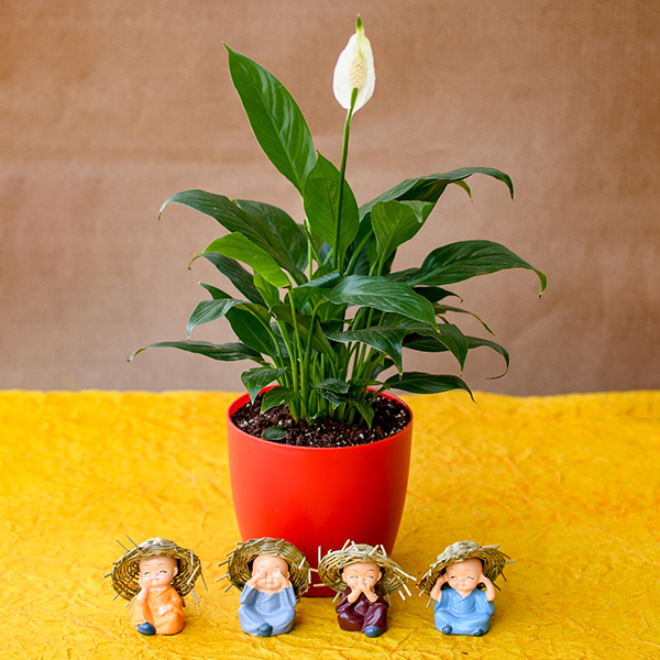peace lily plant help to remove bad indoor air pollution
