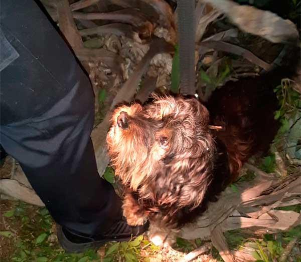 Peluche, el perro que con sus gemido salvó a su dueño de 81 que cayó por un barranco en el Fondillo y estuvo inmóvil durante siete horas