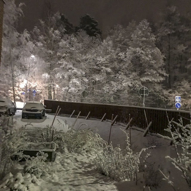 trädgård, snöfall, snö