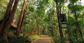 Taman Hutan Raya Juanda