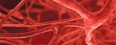 геморрагический васкулит к какому врачу