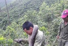 Hà Tỉnh : Dọn rừng bắt được trăng khủng nặng nặng 20kg