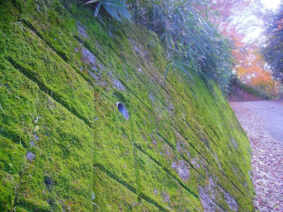 大阪府・府民の森〔緑の文化園〕むろいけ園地ハイキング 苔の壁