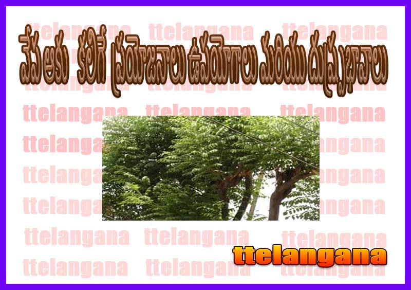 వేప ఆకు యొక్క ప్రయోజనాలు ఉపయోగాలు మరియు దుష్ప్రభావాలు