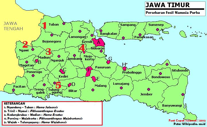 Fcs Fuat Cepat Selamat Peta Persebaran Manusia Purba Di Jawa Timur