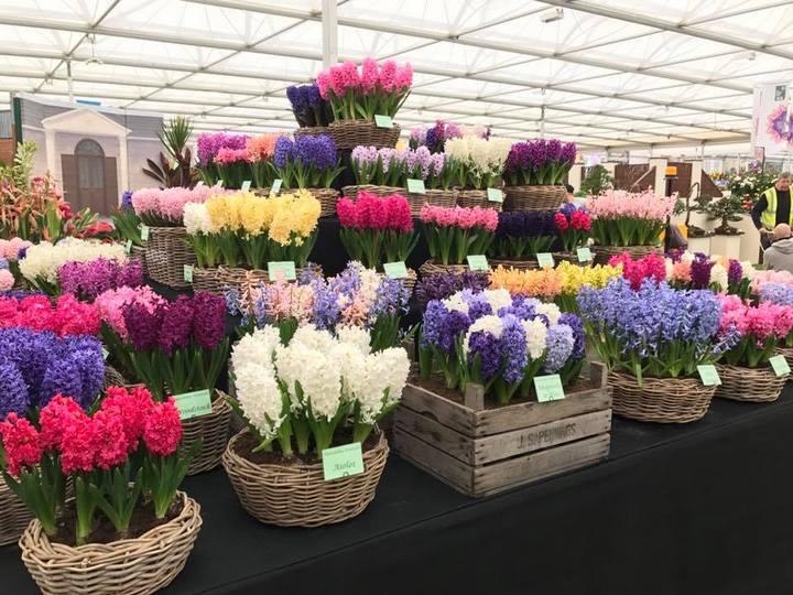Bulbos de flor en Great Pavilion, RHS Chelsea Flower Show