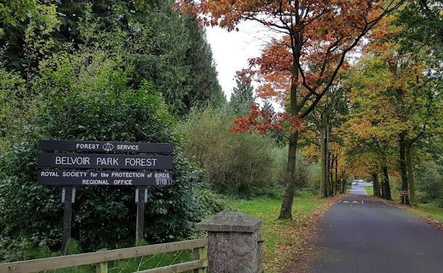 Belvoir Park Forest - Irlandia Utara