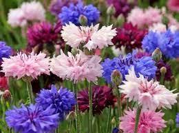 высадка цветов в открытый грунт