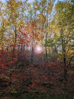 Maple Trees By The Creek, Greenlink Trail, Cape Breton Island