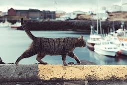Ini yang terjadi pada kucing saat mati dan banjir