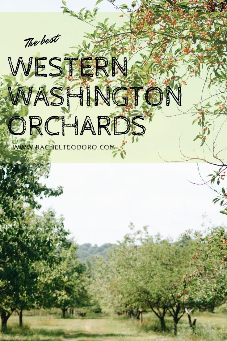 western washington apple orchards