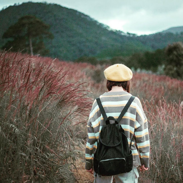 Đến với Đà Lạt hãy ngắm đồi cỏ hồng đuôi chồn đẹp tựa xứ Nhật Bản đẹp mê hồn 9
