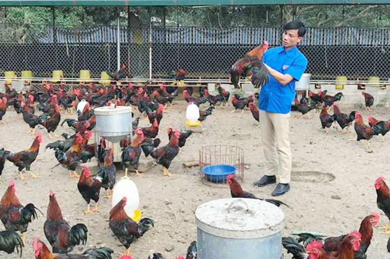 Kinh doanh chăn nuôi có thể kiếm được hàng chục triệu đồng mỗi tháng